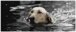 Nadando sin rumbo