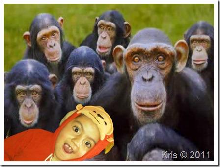 Family-monkey